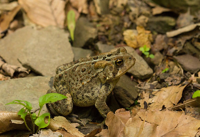 Frog on a hike